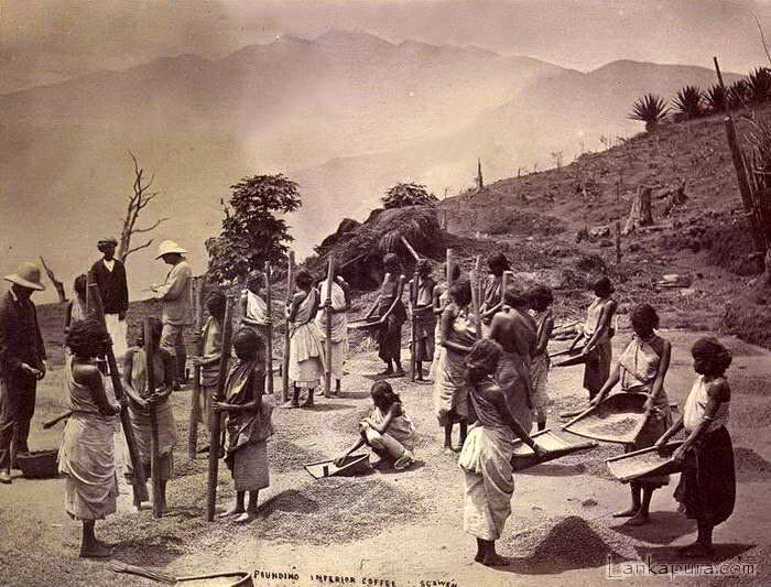 Pounding Ceylon Coffee Late 1800
