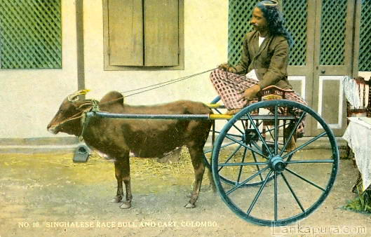 Singhalese Race Bull and Cart colombo early 1900