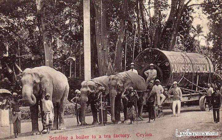 Elephant transporting a boiler to Tea Factory