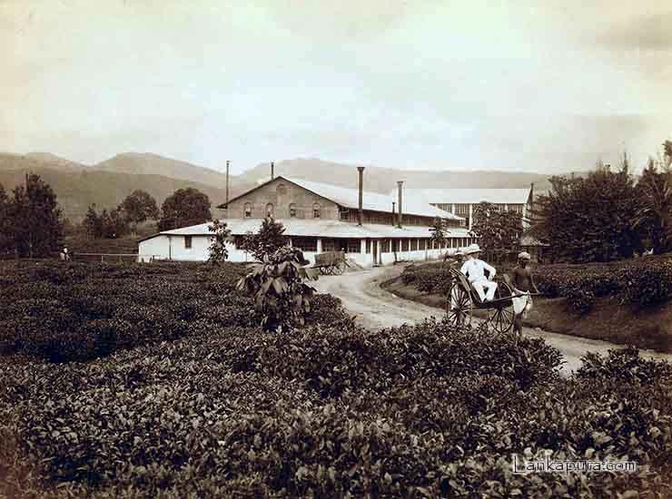 tea factory mariawatta tea estate
