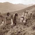 Tea pickers Ceylon