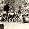 Loading plumbago barrels into bullock carts for shipping
