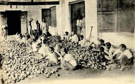 Workers sorting copra, Ceylon