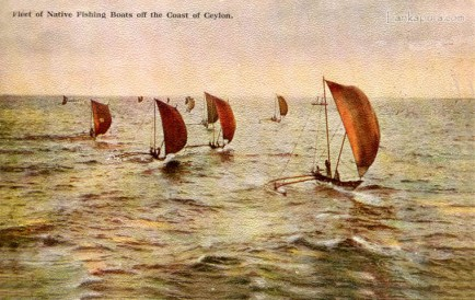 Fleet of Native Fishingboats Ceylon