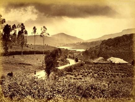 A tea garden Nuwara Eliya