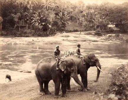 Ceylon Elephants c1880