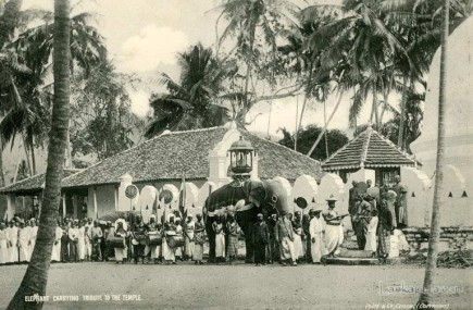Elephant carrying tribute to the Buddhist temple, Sri Lanka
