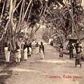 Galle Road Near Colombo Sri Lanka Late 1800s