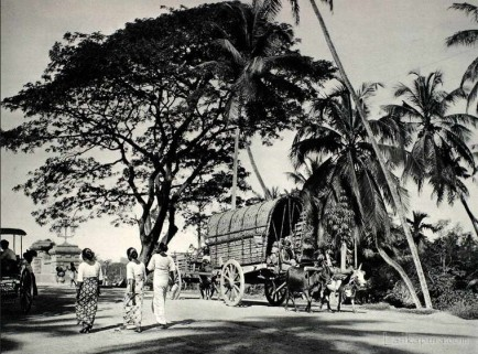 Road scene near Colombo Sri Lanka