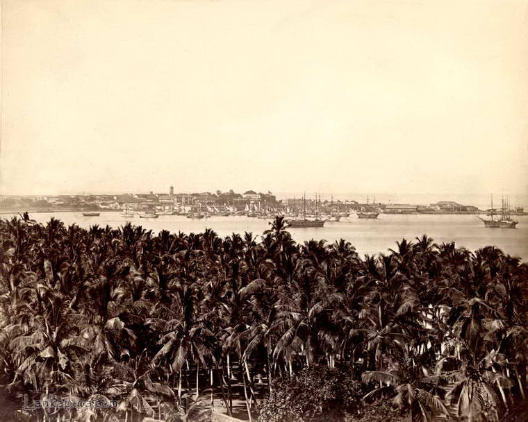 View across a palm grove to Colombo town and harbour, Ceylon