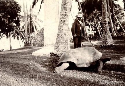 The oldest inhabitant of Galle 1903