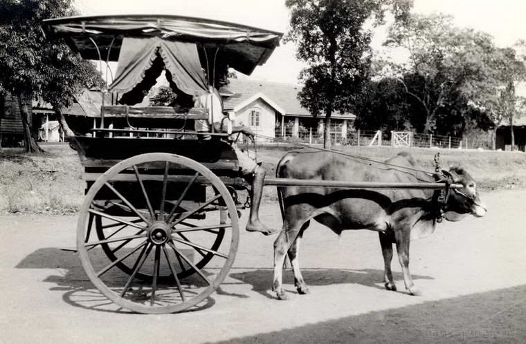 Bullock cart near Kandy, Ceylon 1930 - 1940