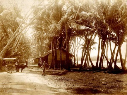Typical Road scene on Galle Road, Ceylon 1880
