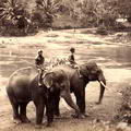 River Scene, Ceylon Elephants c.1880