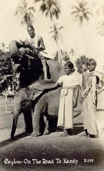 Natives on an Elephant going to Kandy 1930s