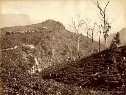Tea plantations near Devon Falls, Ceylon 1870