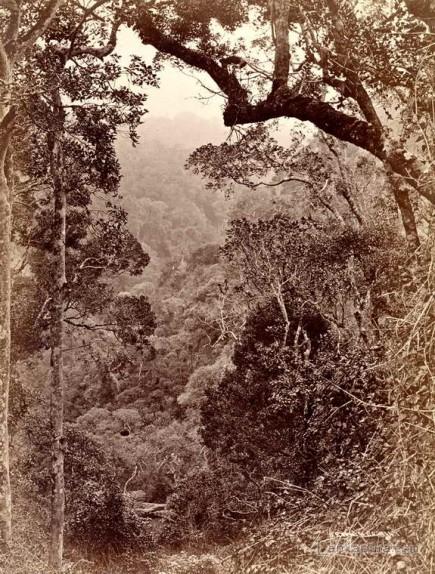 The Jungle, Nuwara Eliya, Ceylon