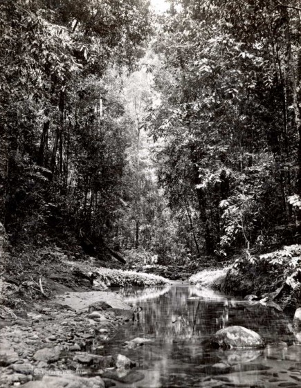 A stream in the Sinharaja Forest, Ceylon