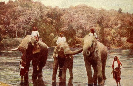 Elephants after their Bath, Ceylon
