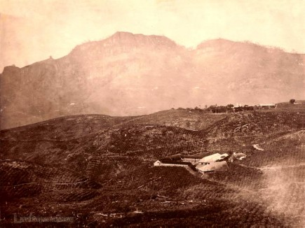 A TEA PLANTATION AT DELTA PUNLAWA. CEYLON 1860