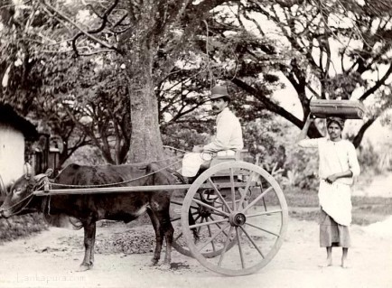 A Singalese man in a Bullock Hackery followed by a coolie 1903