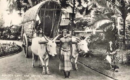 Bullock cart, common local transport Ceylon c.1930