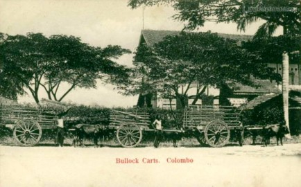 The most common form of Native Ceylonese transportation Bullock Cart
