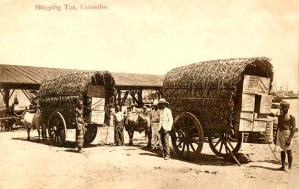 Transport Tea for shipping, Colombo c.1912