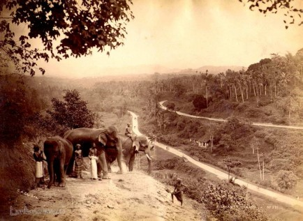 Elephants at Kandy Ceylon Early 1900