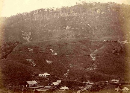 Up country Tea plantation in Sri Lanka 1880