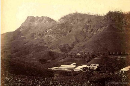 Tea Plantation & The Factory c.1880's