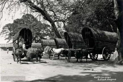 Bullock Wagons Colombo 1930s