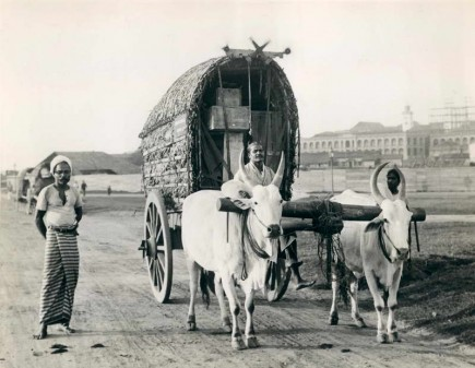 Ox cart near Colombo fort 1929