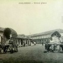 Bullock carts pass through Union Place Colombo